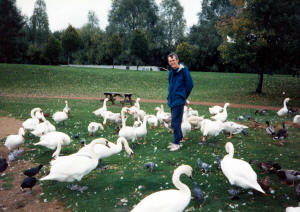 Walter Cooke and a flock of swans in England